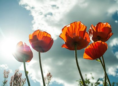 Bloom Blossom Flora 53013